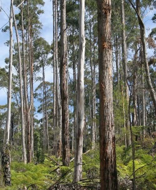 Community Forestry (Western Victoria)