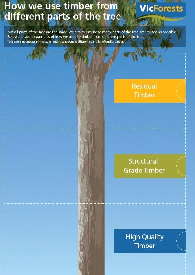 121b73e07f53 We aim to ensure as many parts of the tree are utilised as possible. Below  are some examples of how we use the timber from different parts of the tree.