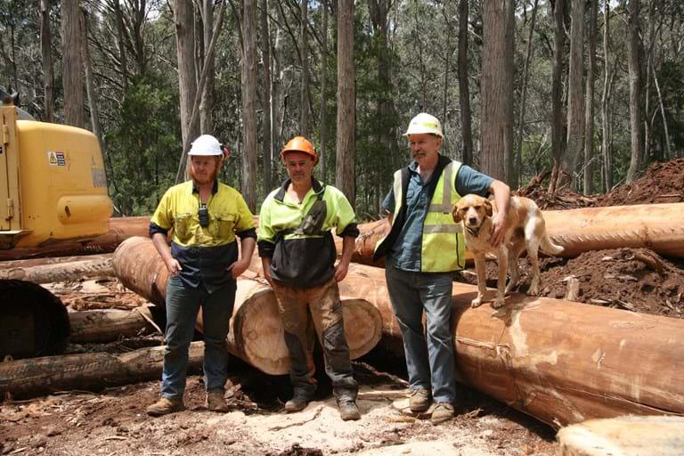 logging industry jobs latest news